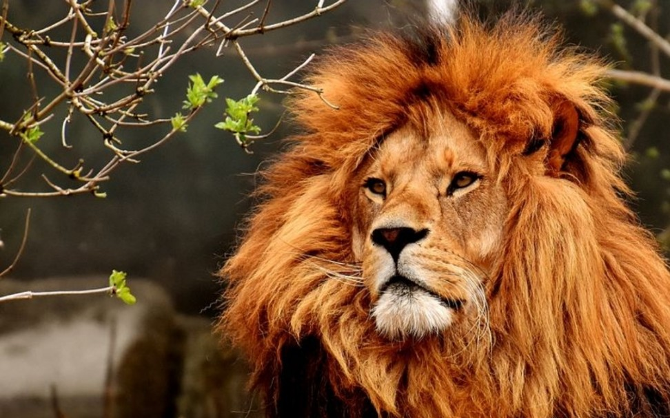 essay on lion in english for all students