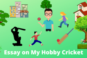 Essay on my hobby cricket in English